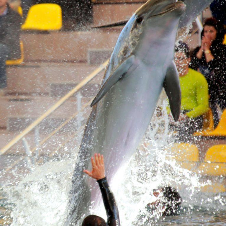 بلیط شنا با دلفین ها