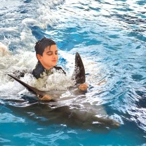 شنا با دلفین در کیش