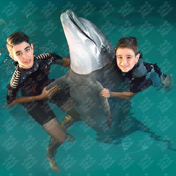 تخفیف شنا با دلفین کیش
